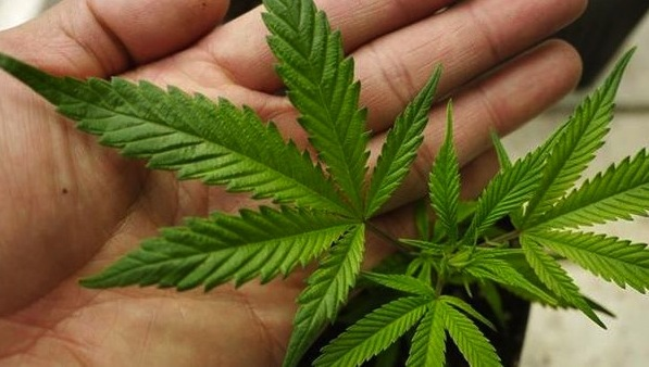 Denver Council moves to decriminalize Marijuana for Minors