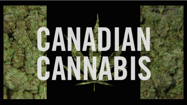 Canadian Cannabis (trailer)