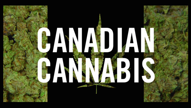 VICE Canadian Cannabis series