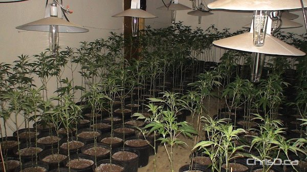 Calgary fights legal medical grow ops