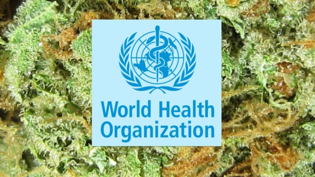 W.H.O. calls for decriminalization of marijuana