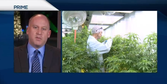 Injunction for pot growers upheld