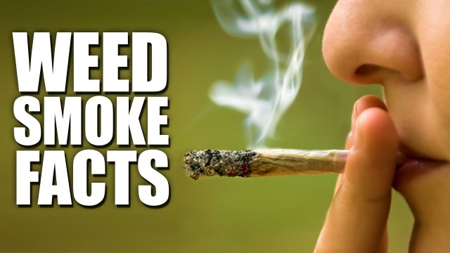 How Dangerous Is Secondhand Pot Smoke?