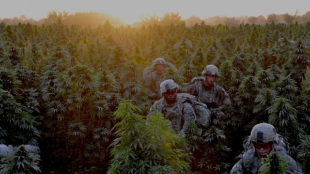 Marijuana: preferred drug of the army