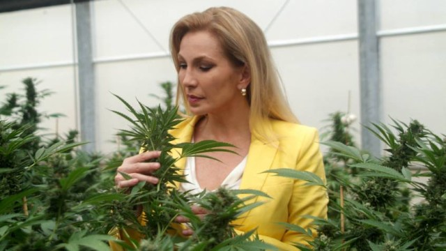 Women are the secret to marijuana business