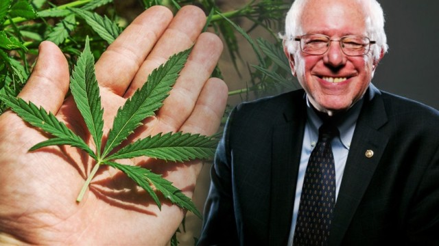 Pot smokers for Bernie