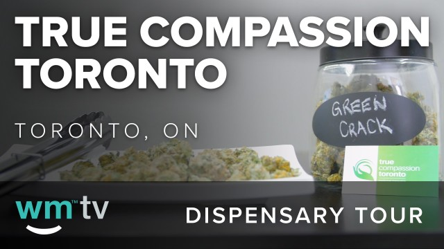 Dispensary Tour: True Compassion Toronto