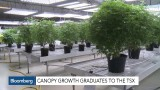 Canopy Corp surges on stock market
