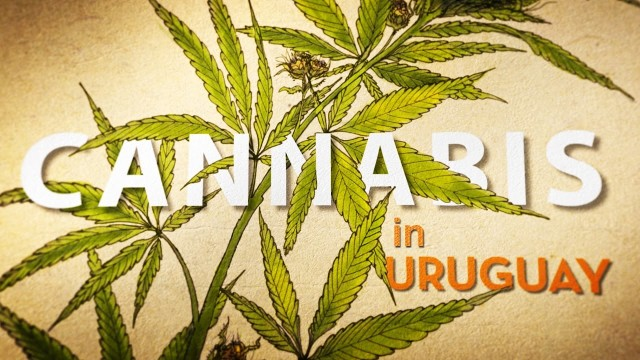 Cannabis in Uruguay (trailer)