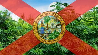 Cannabis smuggling in Florida