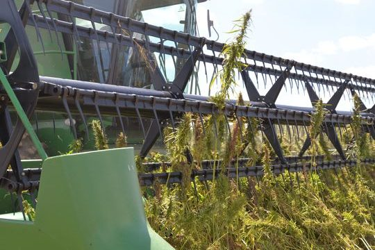 America moves to end hemp prohibition